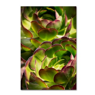 Geoffrey Baris 'So Succulent' Canvas Art