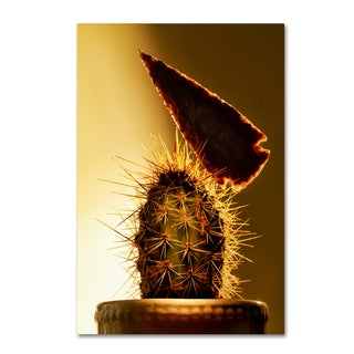 Joe Felzman Photography 'Arrowhead And Cactus' Canvas Art
