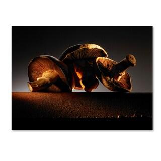 Joe Felzman Photography 'Mushroom On Ledge' Canvas Art