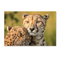 Jaco Marx 'Cheetah Eyes' Canvas Art