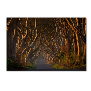 Piotr Galus 'The Dark Hedges In The Morning Sunshine' Canvas Art