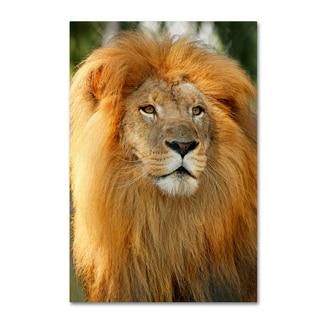 Mike Jones Photo 'Lion' Canvas Art