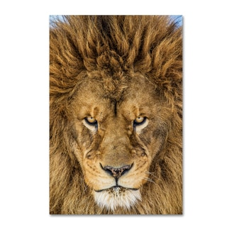 Mike Centioli 'Serious Lion' Canvas Art