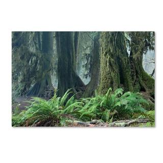 Mike Jones Photo 'Washington Olympic NP Foggy Ferns' Canvas Art