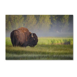 Sandipan Biswas 'Bison In Morning Light' Canvas Art