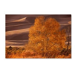 Mike Jones Photo 'Sand Dunes NP' Canvas Art