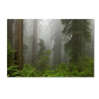 Mike Jones Photo 'Redwoods NP Fog' Canvas Art