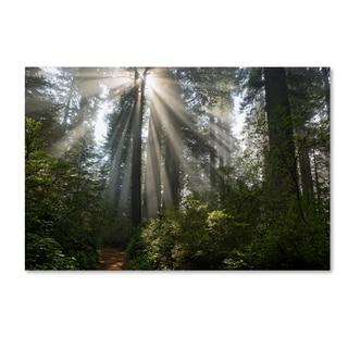 Mike Jones Photo 'Redwoods NP Ladybird Johnson Lightbeams' Canvas Art