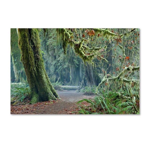Mike Jones Photo 'Olympic NP Trail' Canvas Art