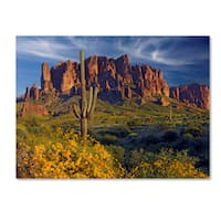 Mike Jones Photo 'Lost Dutchman flowers' Canvas Art