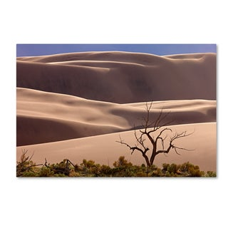 Mike Jones Photo 'Great Sand Dunes NP Tree' Canvas Art