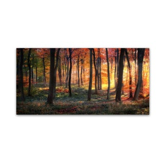 Photokes 'Autumn Woodland Sunrise' Canvas Art