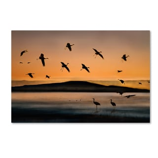 Shenshen Dou 'Fly In At Sunset' Canvas Art