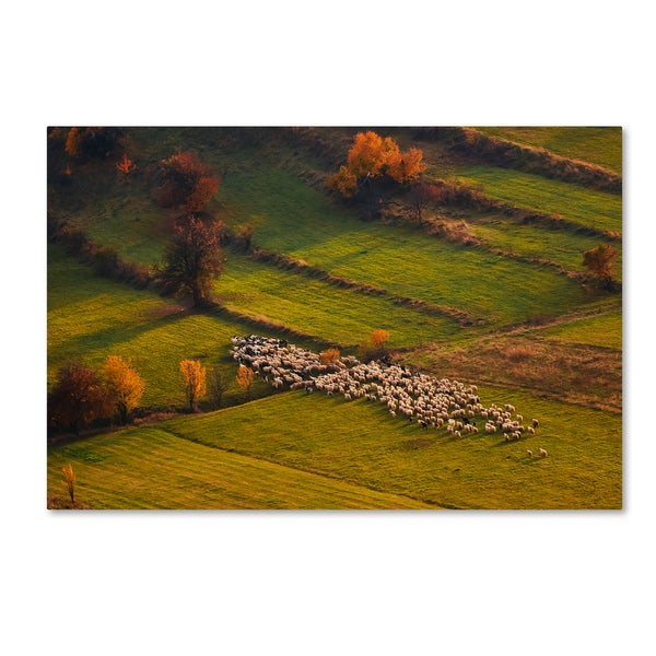 Cristian Lee 'Sheep Herd At Sunset' Canvas Art