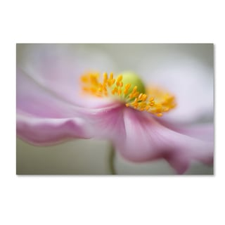 Mandy Disher 'Dreaminess' Canvas Art