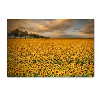 Piotr Krol 'Sunflowers' Canvas Art