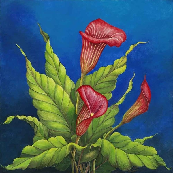 """Red Calla Lilies"" by Carol Sabo, Canvas Giclee Wall Art"