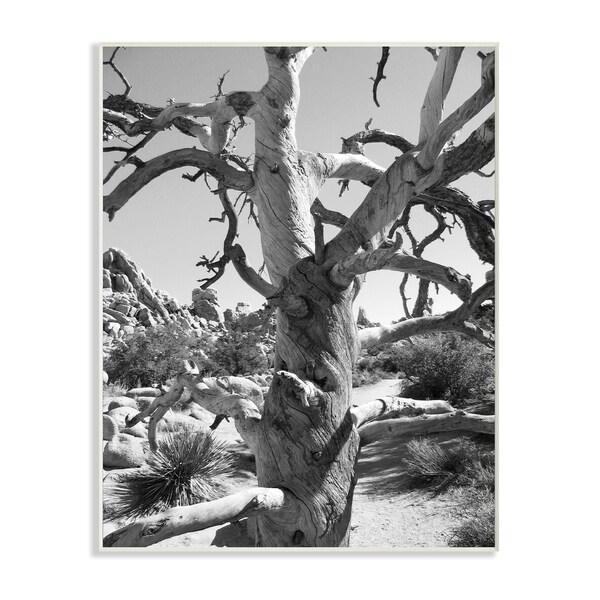 Desert Tree Photography Wall Plaque Art