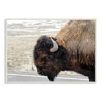 Beautiful Buffalo Photography Wall Plaque Art