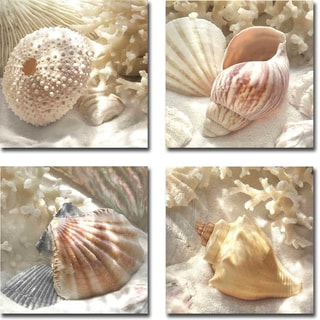 Coral Shell I, II, III, and IV by Donna Geissler 4-piece Gallery-Wrapped Canvas Giclee Art Set