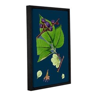 Bridgeman Narrow Leaved Everlasting Pea, Gallery Wrapped Floater-framed Canvas