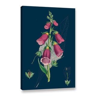 Bridgeman Gnaphalium Margaritaceum Pearly Everlasting, Gallery Wrapped Canvas