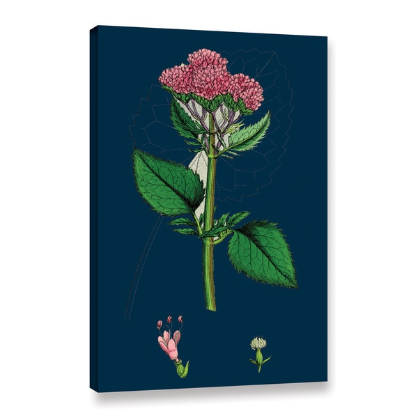Bridgeman Small Flowered Melilot, Gallery Wrapped Canvas