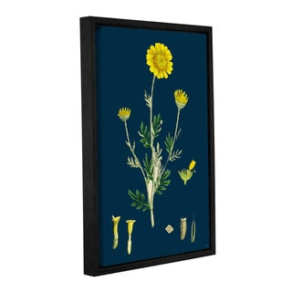 Bridgeman Poa Stricta , Gallery Wrapped Floater-framed Canvas