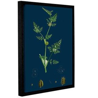 Bridgeman Sclerochloa Borreri, Gallery Wrapped Floater-framed Canvas