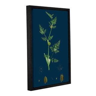 Bridgeman sclerochloa Procumbens, Gallery Wrapped Floater-framed Canvas
