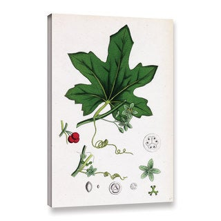 Bridgeman Red Berried Bryony, Gallery Wrapped Canvas