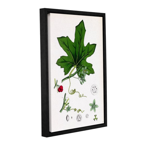 Bridgeman Red Berried Bryony, Gallery Wrapped Floater-framed Canvas