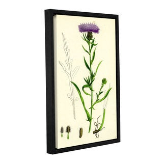 Bridgeman Black Knapweed, Gallery Wrapped Floater-framed Canvas