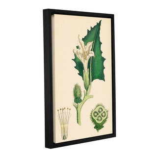 Bridgeman Common thorn Apple, Gallery Wrapped Floater-framed Canvas