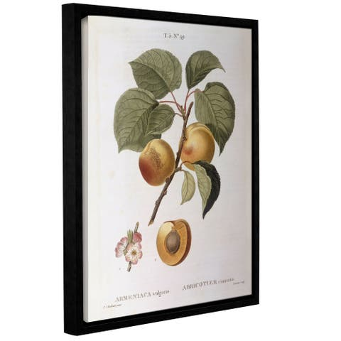 Pierre Joseph Redoute's Apricot, Gallery Wrapped Floater-framed Canvas