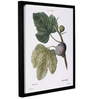 Pierre Joseph Redoute's Fig Ficus, Gallery Wrapped Floater-framed Canvas