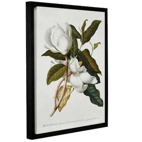 Georg Dionysius Ehret's Magnolia, Gallery Wrapped Floater-framed Canvas