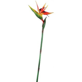 "Bird Of Paradise ""Natural Touch"" 31"""