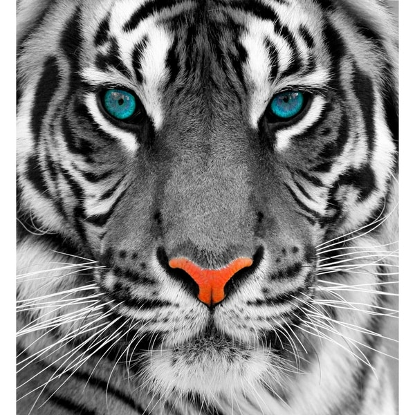 "Cortesi Home Thrill of the Tiger Tempered Glass Wall Art, 24"" x 24"""