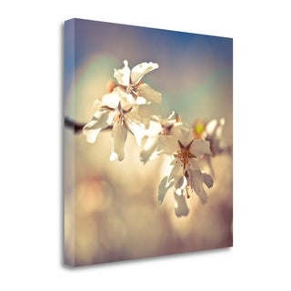 Soft Bloom I By Assaf Frank,  Gallery Wrap Canvas