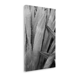 Abstract Agava II By Elizabeth Urquhart,  Gallery Wrap Canvas