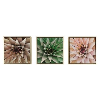 Boston Warehouse S/3 12x12 Framed Canvas Art, Succulents