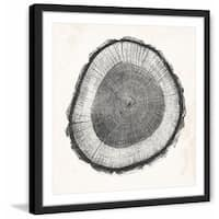 'Tree Ring II' Framed Painting Print