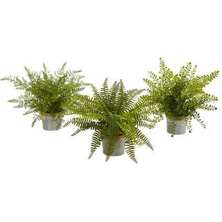 """14"""" Assorted Ferns with Planter Artificial Plant (Set of 3)"""