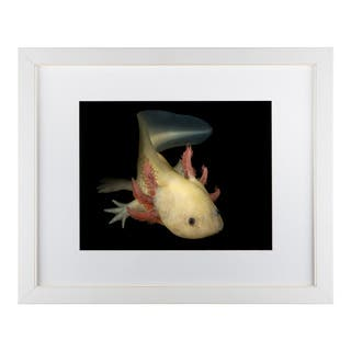 Pedro Jarque 'Axolotl Forever Young' Matted Framed Art