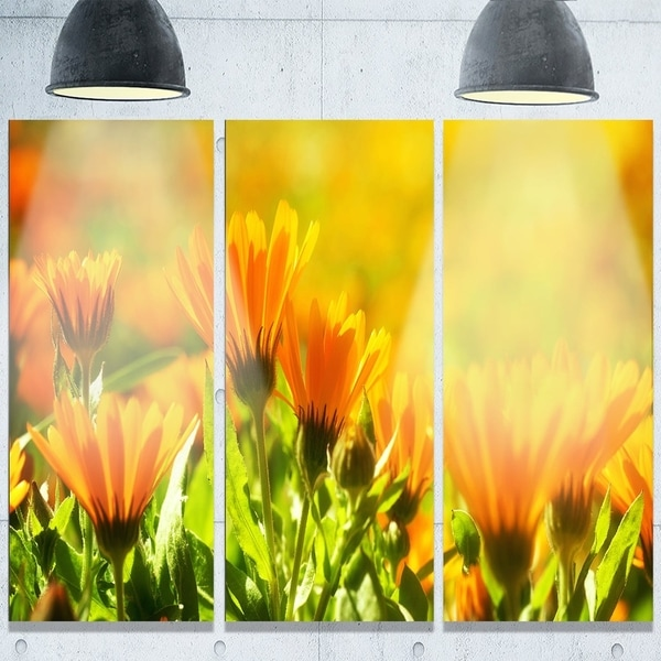 Designart \'Orange Marigold Flowers in Sunlight\' Extra Large Floral Glossy Metal Wall Art
