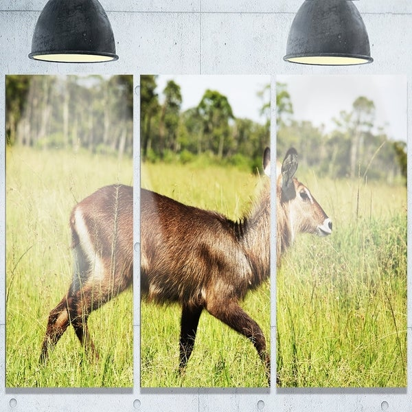 Designart \'Waterbuck Antelope in Green Grass\' Extra Large African ...
