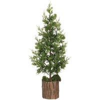 Potted Cedar Tree