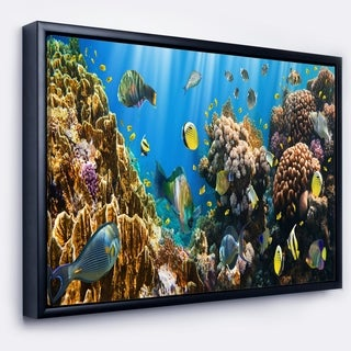 Designart 'Coral Colony Panorama' Photography Framed Canvas Art Print
