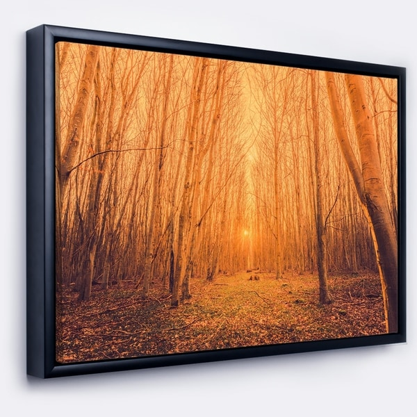 Designart 'Sunrise in a Forest with Tall Trees' Landscape Photography Framed Canvas Print